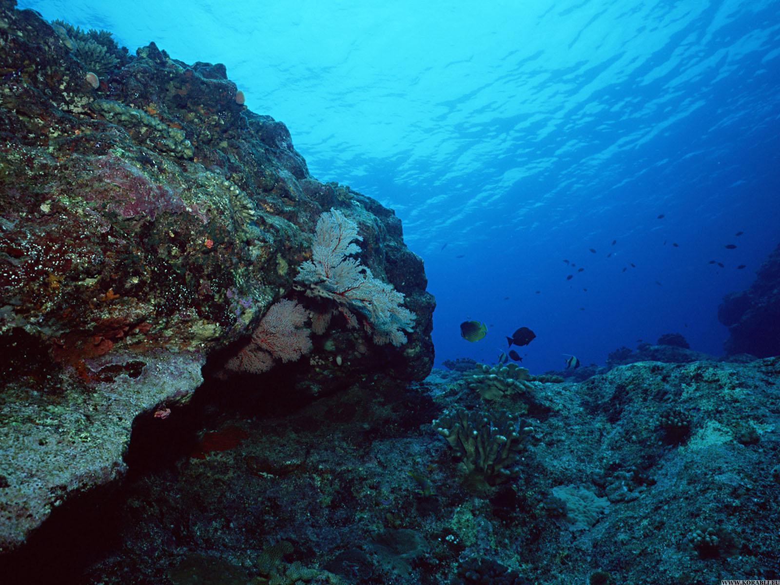 на дне океана картинка пальма